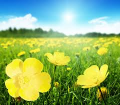 spring in flowers and greens photos wallpapers u2022 elsoar
