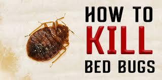 Can Bleach Kill Bed Bugs Treatment For Bed Bugs There Are No Tests Or Other Scientific