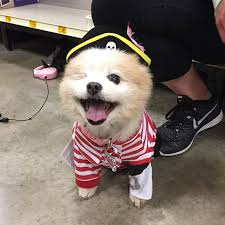 Halloween Costumes Puppies 10 Awesome Halloween Costume Ideas Dogs