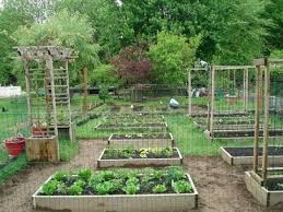 Backyard Garden Ideas Backyard Organic Gardening Ideas How My Transformed My S