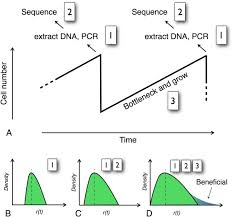 beyond genome sequencing lineage tracking with barcodes to study