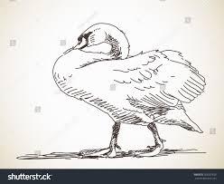sketch swan hand drawn illustration stock vector 355537829