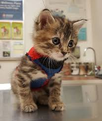 Cat Instagram Tube Sock Sweater Kitten Pipes Rescued From Hurricane Matthew New