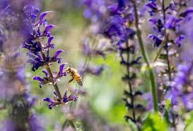 attracting bees