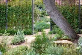 native plants south australia 17 best images about garden design on pinterest gardens australian