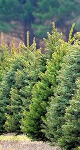 243 best christmas tree lot images on pinterest christmas tree