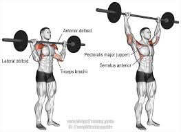 primary archives page 2 of 3 weight training guide