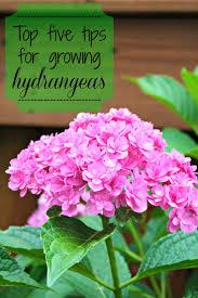105 best garden and landscaping images on pinterest gardening