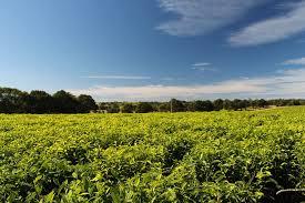 Teh Afrika teh perkebunan afrika selatan 盞 free photo on pixabay