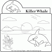 orca whale coloring page coloring home