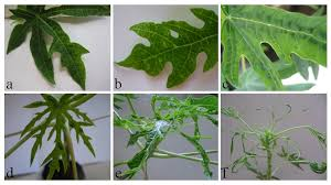 Tropical Plant Biology - journal of plant physiology peer reviewed journal