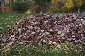 autumn walk emerson thanksgiving week trash schedule yard trim
