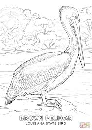louisiana state bird coloring page free printable coloring pages