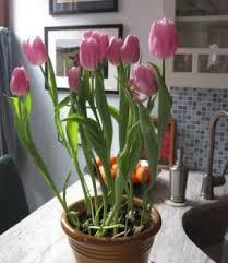 4 small garden ideas for a splendid apartment vegetable gardener