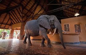 zambia safari accommodations www africansafarico com