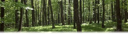 Wisconsin Forest images Wisconsin society of american foresters wisconsin society of jpg