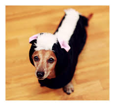Ghost Dog Halloween Costumes by Rufusontheweb Where It Is All About The Dachshunds Page 95