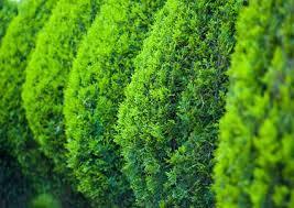 Backyard Landscaping Idea Backyard Landscaping Ideas For Privacy Lovetoknow