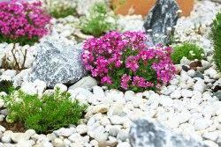 Rock In Garden How To Use Rocks In Your Verge Garden Garden Outdoor Lifestyle
