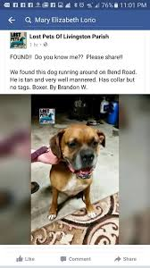 dog photo albums lost dogs tangipahoa parish