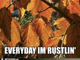 Fall Memes - 14 fall memes so you can usher in the greatest season of them all