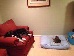 Cats In Dog Beds 25 Helpless Dogs That Had Their Bed Stolen By The Cat