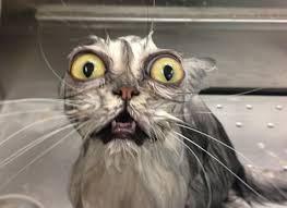 Meme Shock - 20 funny shocked cat memes
