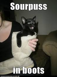 Puss In Boots Meme - sourpuss in boots lolcats lol cat memes funny cats funny