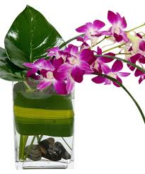 tropical breeze multiple dendrobium orchid stems with artisitc