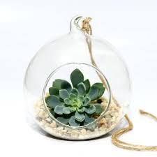 hanging glass bauble succulent terrarium kit by dingading