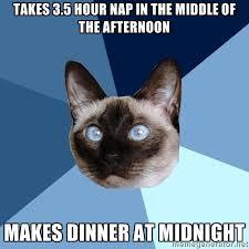 Saturday Meme - saturday 3 january 2015 meme images chronic illness cat