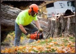oakland county tree service