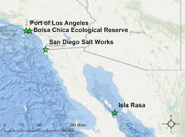 Csula Map Elegant Tern Migration May Help Species Withstand Effects Of El Niño
