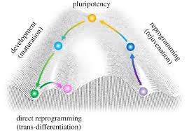 present and future challenges of induced pluripotent stem cells