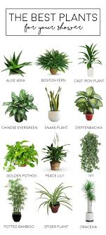 best bedroom plants bathroom bathroom houseplants for the plants learn about best