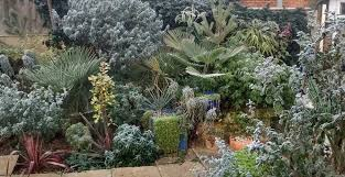 Tropical Plants For Garden - tropical plants you can use to create a uk hardy exotic paradise