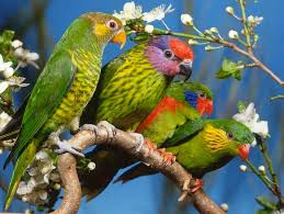 parrots in paradise kealakekua hawaii exotic bird 100 best i love nature images on pinterest scenery beautiful