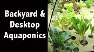 dyi backyard aquaponics desktop and home systems off grid