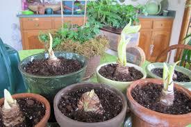 plants to grow indoors real gardeners grow plants indoors too