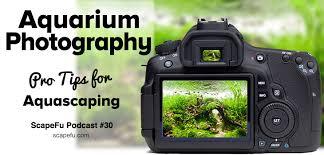Aquarium Aquascaping Aquarium Photography Tutorial For Aquascaping Scapefu