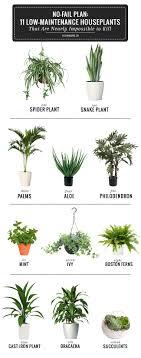 best house plants 11 easy to grow houseplants helloglow co