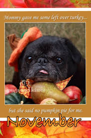 thanksgiving pet photos 2740 best pug mugs images on pinterest pug love pug life and
