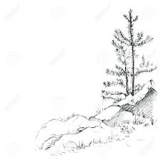 young pine trees and rocks drawing by pencil sketch of wild