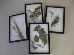 montana native plant society p1010346 jpg