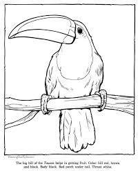 25 toucan craft ideas parrot craft jungle