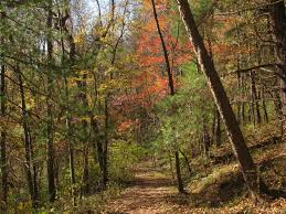 the importance and beauty of forests metro parks central ohio