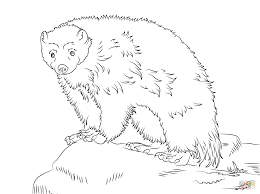 download wolverine animal coloring pages