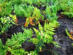 santa cruz native plants santa cruz mountains trails redwoods to sand hills at henry