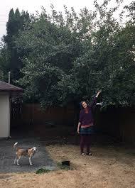 our dogs u2013 psychic unicorns