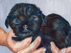 affenpinscher terrier mix nauvoo il affenpinscher meet tess in nauvoo il a dog for
